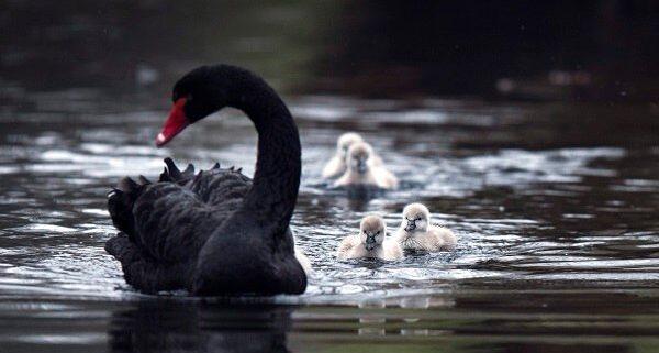 ser-madre - FOTO EFE/ROBERT VOS